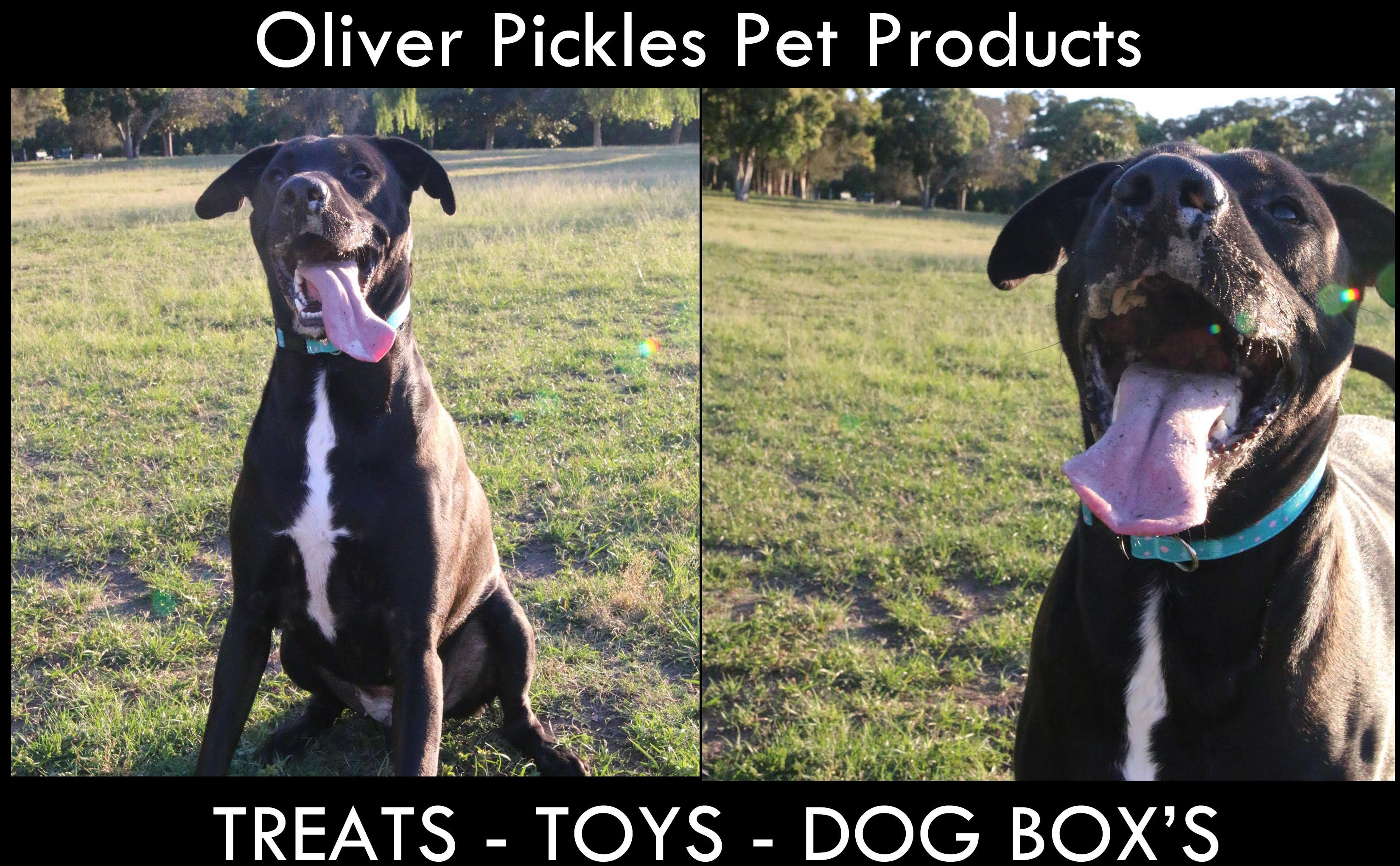 Oliver Pickles Pet Products