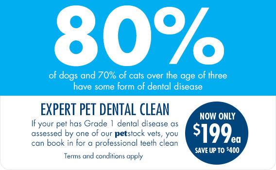 Expert Pet Dental Clean